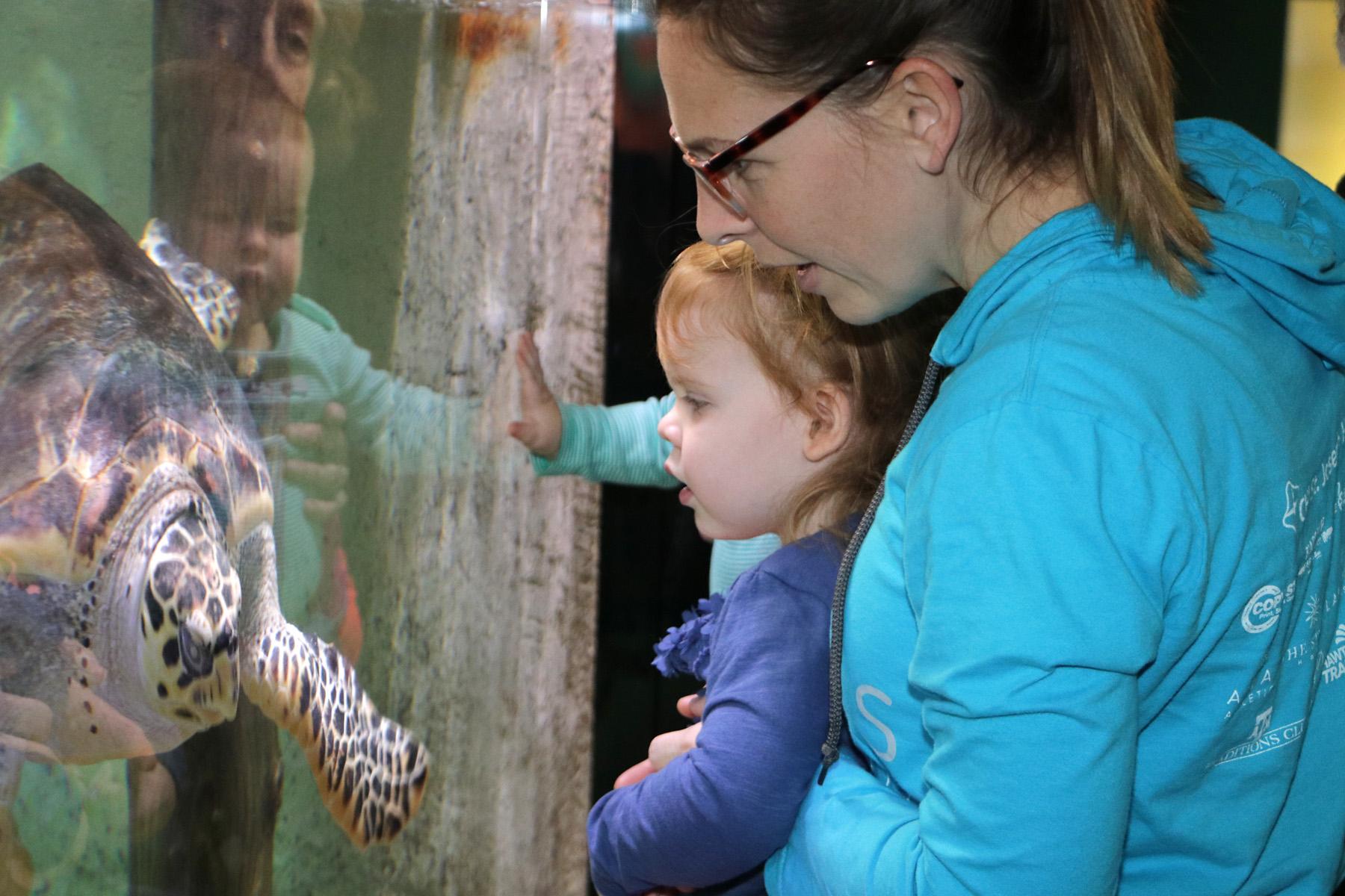 Aquarium Homeschool Day